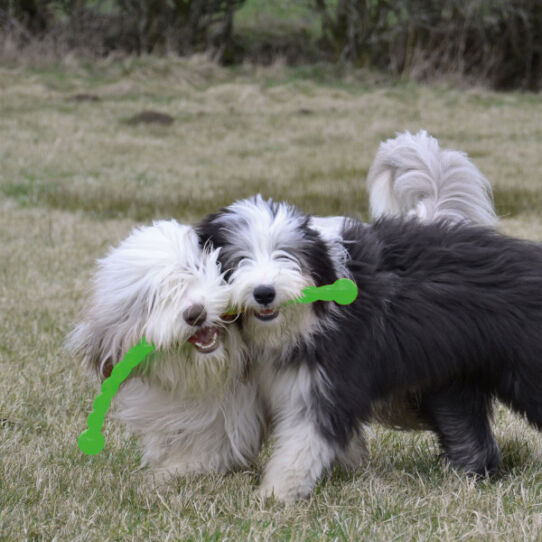 61101_Hundespielzeug KONG_Safestix